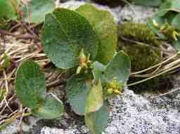 World's Smallest Plant